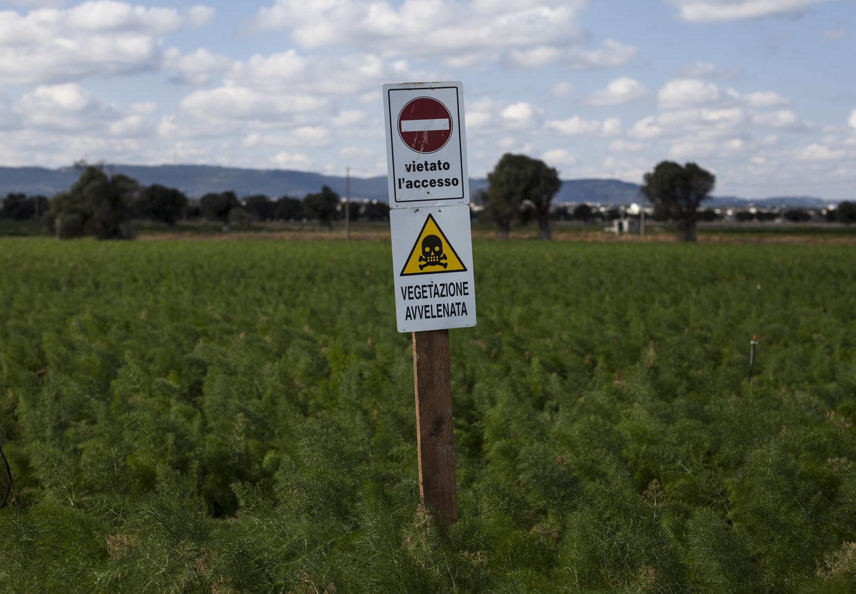 Gli effetti dei pesticidi sulla salute